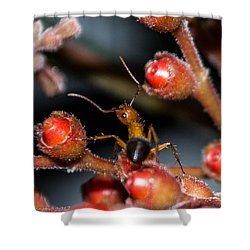 Curious Ant Shower Curtain