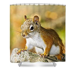Cute Red Squirrel Closeup Shower Curtain