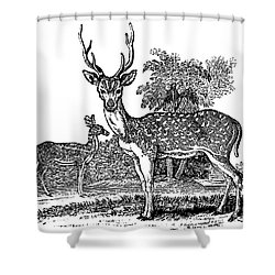 Deer Shower Curtain by Granger