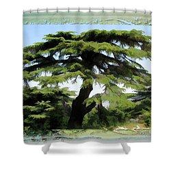 Do-00512 Cedar Forest Shower Curtain