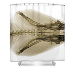 Eastern Diamondback Rattlesnake Head Shower Curtain by Ted Kinsman