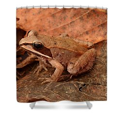 Eastern Wood Frog Shower Curtain by Ted Kinsman