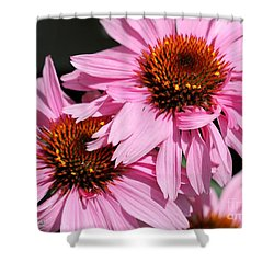 Echinacea Purpurea Or Purple Coneflower Shower Curtain by J McCombie