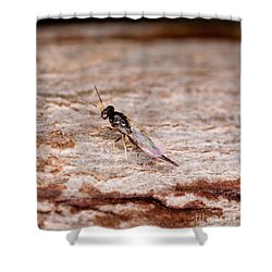 Emerald Ash Borer Parasite Shower Curtain by Science Source