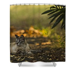 Evening Glow Shower Curtain by Kim Henderson