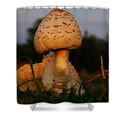 Evening Mushroom Shower Curtain by Karen Harrison