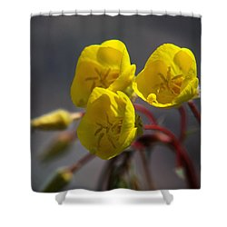 Shower Curtain featuring the photograph Desert Evening Primrose by Joe Schofield