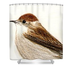 Shower Curtain featuring the drawing Female Blackcap  by Barbara Moignard