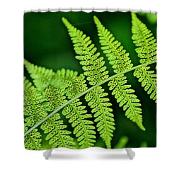 Fern Seed Shower Curtain by Sharon Elliott