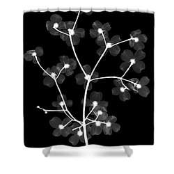 Flowering Dogwood X-ray Shower Curtain by Ted Kinsman