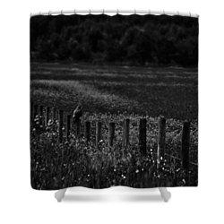 Foraging Break  Shower Curtain by Empty Wall