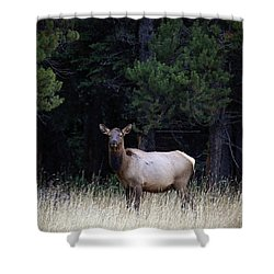 Shower Curtain featuring the photograph Forest Elk by Steve McKinzie