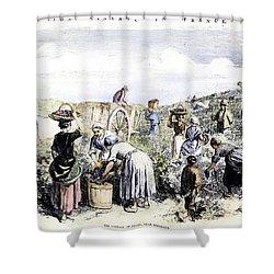 France: Grape Harvest, 1854 Shower Curtain by Granger