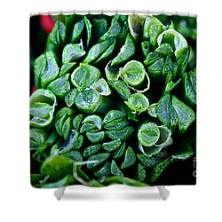 Fresh Chives Shower Curtain by Susan Herber