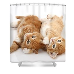 Ginger Kittens Shower Curtain by Mark Taylor