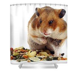 Golden Hamster Shower Curtain by Jane Burton