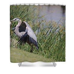 Great Blue Heron Shower Curtain by Donna Greene