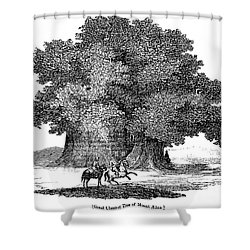 Great Chestnut Tree Shower Curtain by Granger
