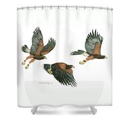 Harris Hawk Cast Shower Curtain by Tim McCarthy