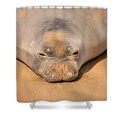 Hawaiian Monk Seal Shower Curtain by Dave Fleetham - Printscapes