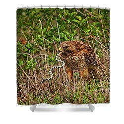 Hawk And Snake Shower Curtain