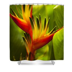 Heliconia Shower Curtain by Dana Edmunds - Printscapes