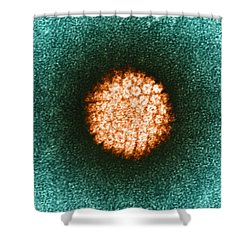 Human Papilloma Virus Hpv Shower Curtain by Science Source