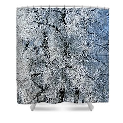 Iced Shower Curtain by Colleen Coccia