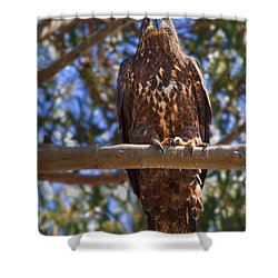 Immature Bald Eagle Shower Curtain by Beth Sargent