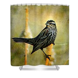 Shower Curtain featuring the photograph In The Limelight by Blair Wainman