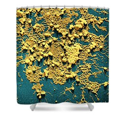 Influenza B Shower Curtain by Omikron