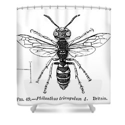 Insects: Wasps Shower Curtain by Granger