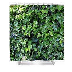 Ivy Wall Shower Curtain by Carol Groenen