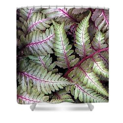 Shower Curtain featuring the photograph Japanese Painted Fern by Chris Anderson
