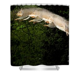 Jumping Gray Squirrel Shower Curtain by Ted Kinsman