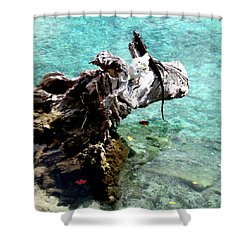 Shower Curtain featuring the photograph King Of The Blue Lagoon by Danielle  Parent