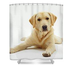 Labrador X Golden Retriever Puppy Shower Curtain by Jane Burton