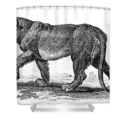 Lion Shower Curtain by Granger