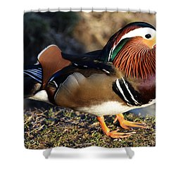 Mandarin Duck Shower Curtain