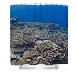 Masses Of Staghorn Coral, Papua New Shower Curtain by Steve Jones