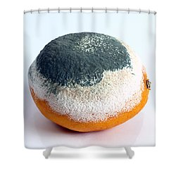Moldy Orange Shower Curtain by Photo Researchers, Inc.