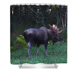 Shower Curtain featuring the photograph Morning Light by Doug Lloyd