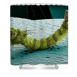 Mosquito Larva, Sem Shower Curtain by Ted Kinsman