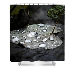Shower Curtain featuring the photograph My Heart Weeps by Peggy Franz