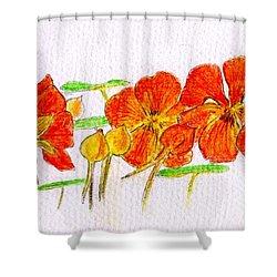 Nasturtiums Shower Curtain by Barbara Moignard