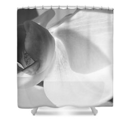 Orchid Shower Curtain by Kume Bryant