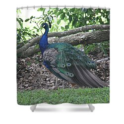 Shower Curtain featuring the photograph Peacock by Donna  Smith