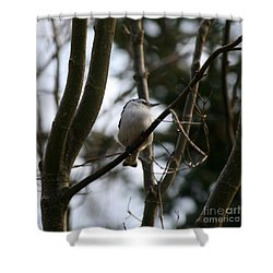 Perched And Content  Shower Curtain by Neal Eslinger