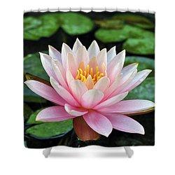 Pink Lotus Shower Curtain by Sumit Mehndiratta