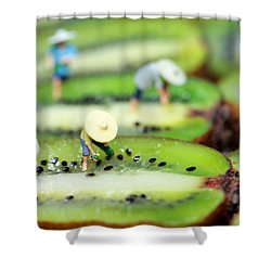 Planting Rice On Kiwifruit Shower Curtain by Paul Ge
